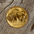 Fine Gold Buffalo Coin On Rustic Wooden Background by Thomas Baker