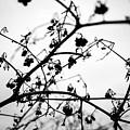 Fineart-nature-4 by Preben Stentoft