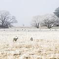 Fingal Winter Farmyard by Jorgo Photography - Wall Art Gallery