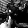 Finger Kiss Cat by Katherine Nutt