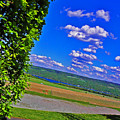 Finger Lakes Country by Elizabeth Hoskinson