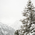 Fir Trees And Mountains by Pati Photography