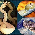 Fire And Ice Slither Collage by Diann Fisher