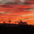 Fire At Dawn by Steven Natanson