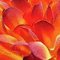 Fire Flower by Jim Cole