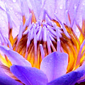Fire In The Lily by John Lautermilch