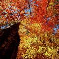 Fall Fire by Tom Nix