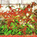 Fire Thorn - Pyracantha by Leslie Montgomery