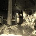 Firece Cat by Freddy Alsante