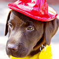 Firefighter Pup by Toni Hopper