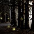 Fireflies by Paul Sachtleben