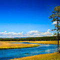 Firehole River by Robert Bales