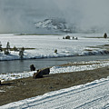 Firehole River Yellowstone by Cindy Murphy - NightVisions