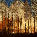 Firestorm by Linda Bailey