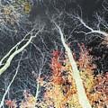 Firestorm by Rose Dellinger