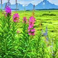 Fireweed In The Foreground 2 by Lisa Lemmons-Powers