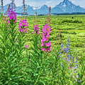Fireweed In The Foreground by Lisa Lemmons-Powers