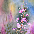 Fireweed by Marsha Karle
