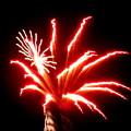 Firework Hibiscus by Adrienne Wilson