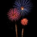 Firework Trees by Elaine Malott