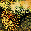 Fireworks 1 by Joan Reese