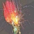 Fireworks by Christine DuMouchel