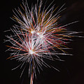Fireworks Midnight Dandelion by Scott Lyons