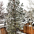 First Blanket Of Snow by Nancy Marie Ricketts