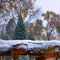 First Colorful Autumn Snow by James BO  Insogna