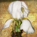 First Iris by Cynthia Wolfe