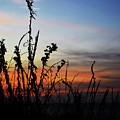 First Landing Sunset by Sarah Scullion