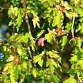First Leaf by R B Harper