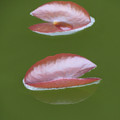 First Lily Pads - Brush Strokes by MTBobbins Photography