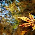 First Sign Of Fall by Sari Sauls