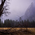 First Snow In Yosemite Valley by Priya Ghose