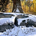 First Snow by Larry Darnell
