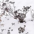 First Snow by Robert Mitchell