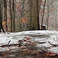 First Snowfall - A Walk In The Woods by Suzanne Gaff