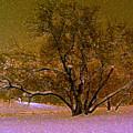 First Snowfall by Sherwanda Irvin