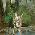 First Young Buck Pad by Eileen Hale
