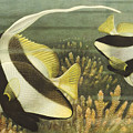 Fish 8 by Bernie's  Art Prints