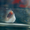Fish by Bastian Brisch