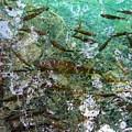 Fish by Helena Jajcevic