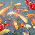 Fish In A Lake by Susanna Katherine