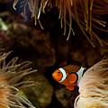 Fish In Sea Anemones Aquarium by Arletta Cwalina