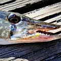 Fish Mouth by Dan Emberton