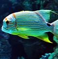 Fish No.3 by Lydia Holly