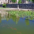 Fish Pond At Biltmore by Jill Lang