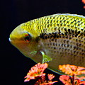 Fish by Rick  Monyahan