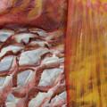 Fish Skin by Steven Stregevsky